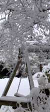 swingseat_under_snow-laden_silver_birch